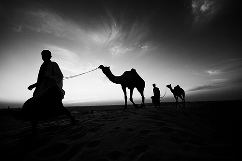 camels_bw