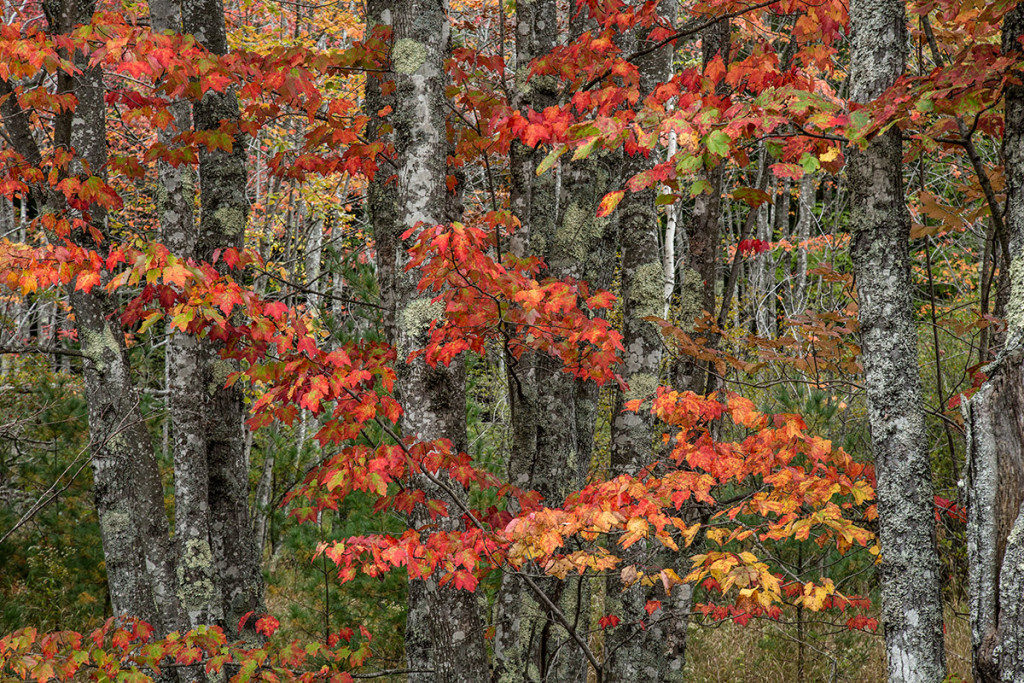 Acadia_Maine_03